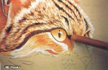 Рисуем сухой пастелью котов